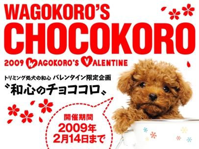 CHOCOKORO.jpg