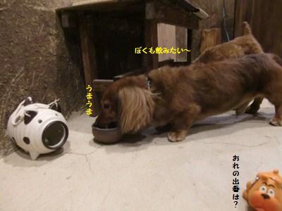 CIMG3704.JPG