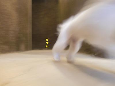 CIMG4626.JPG